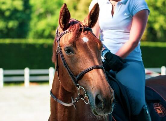 coping with anxiety and horseback riding