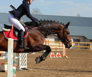 healthy body image equestrian