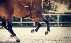 A horse gallops to a stop as it's rider uses the stirrups to brace themselves. This could represent the apprehension that comes from horse related trauma. We offer trauma therapy in Scotch Plains, NJ, anxiety treatment, and other services to support you. Contact a trauma therapist today.