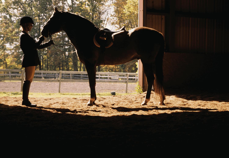 mental health for equestrians
