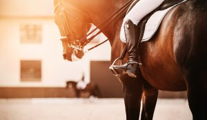 A horse and it's rider stand outside a barn at sunset. We offer equestrian related trauma therapy in Scotch Plains, NJ. Contact a therapist to learn more about anxiety counseling and other services to support you!