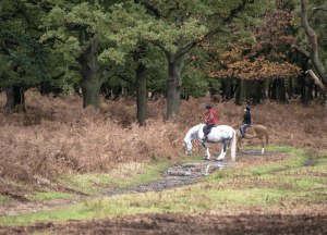 A pair of equestrians ride on a forest trail as their horses stop to eat. We offer support for trail riding anxiety through anxiety counseling in Scotch Plains, NJ. Learn grounding exercises for anxiety from a teenage anxiety therapist.